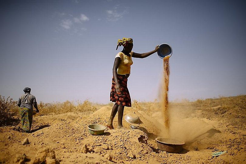 Woman farmer searches for gold, digging and pouring dirt and sand.